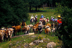 group of ranchers riding behind a herd of longhorn cattle