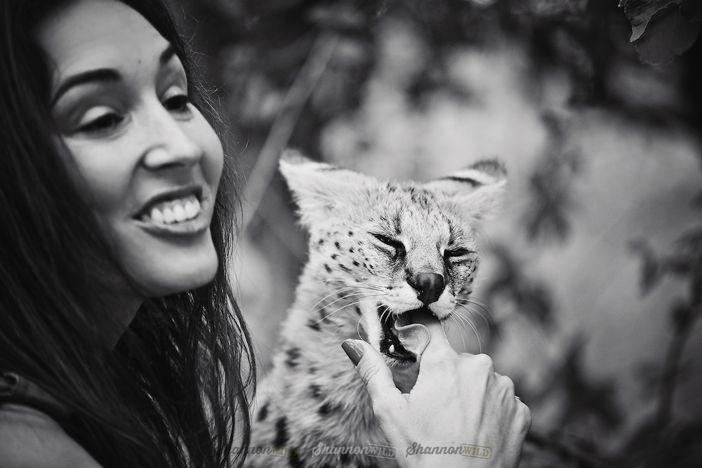 Shannon Benson cuddling with a Serval (Leptailurus serval) at a rehabilitation centre in South Africa.<br /> <br /> The serval is a medium-sized African wild cat. DNA studies have shown that the serval is closely related to the African golden cat and the caracal.