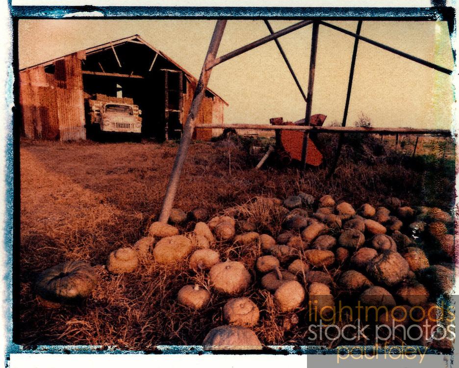 Rotting Pumpkins - Polaroid transfer