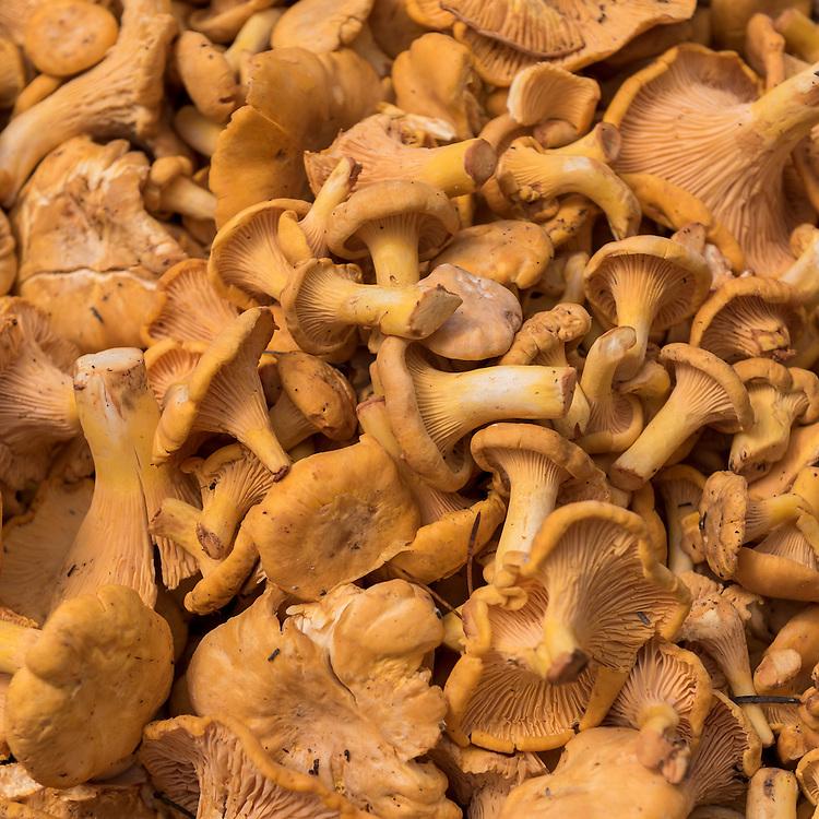Farmer's Market Chanterelles