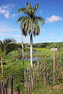 Farm in the Jamal area, Guantanamo, Cuba.