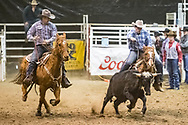 Steer wrestler Chase Albers makes his run during slack at the Bismarck Rodeo on Saturday, Feb. 3, 2018. This photo and more from most runs are available at Bobwire-S.com.