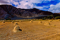 Fields of barley, near Shigatse, Tibet (Xizang), China.
