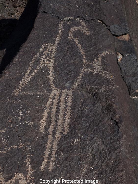 Macaw glyph, Boca Negra Canyon, Petroglyph Nat Mon, NM
