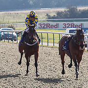 Lingfield 25th February
