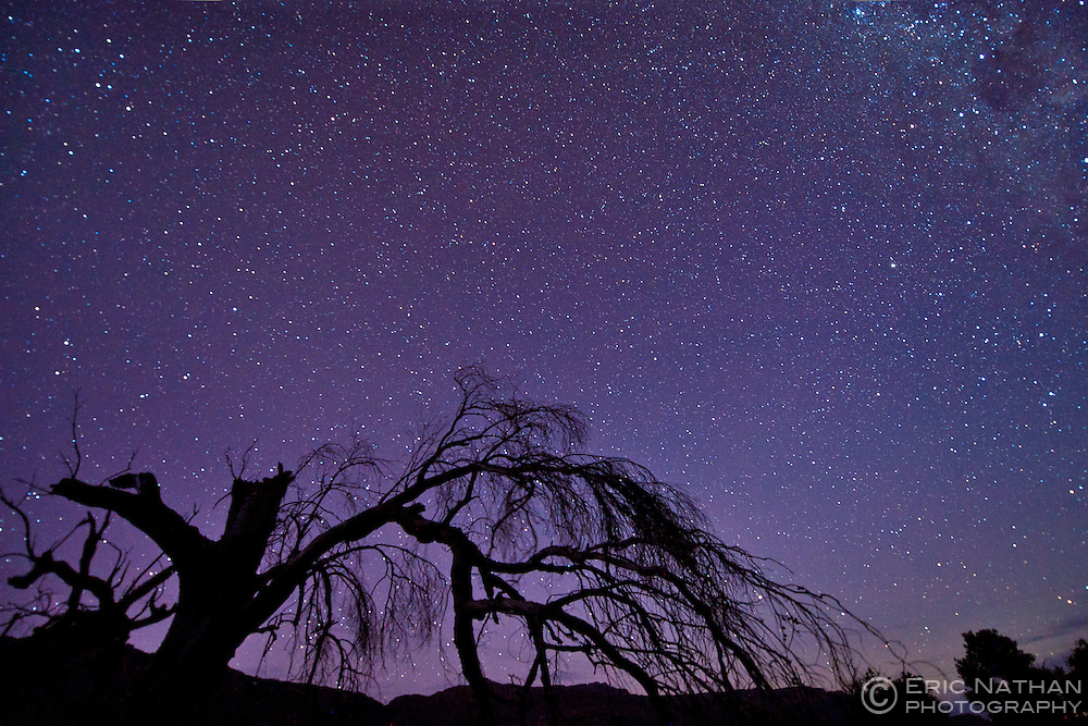 A dead tree silhouetted against the stars in the Cederberg mountains of South Africa.