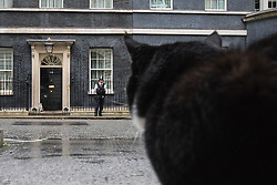 Downing Street, London, August 2nd 2016. Tensions appear to be ongoing in Downing Street as Larry the cat from No. 10 and Palmerston, newly resident at the Foreign Office continue their territorial feud. PICTURED: Adversaries: Palmerston stares at Larry as he sits in the door of No 10.