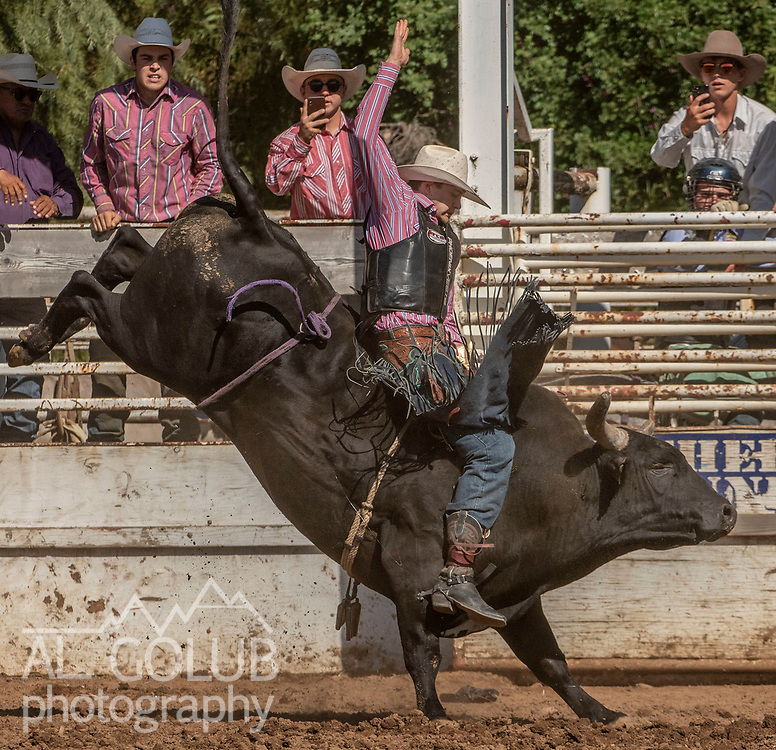 Bull Rider Dalton McMurtrie from Inyokern, California scores 82.5 at the 62nd annual Mother Lode Round-up on Sunday, May 12, 2019 in Sonora, California.  Photo by Al Golub
