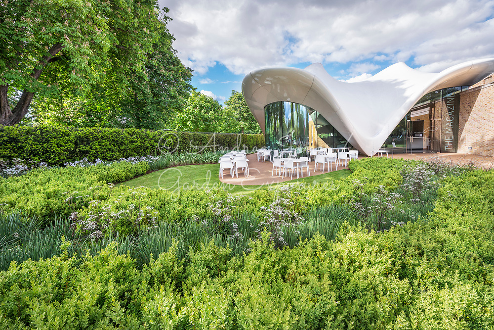 Large borders including Buxus sempervirens (box) shrubs with Allium &lsquo;Mont Blanc&rsquo; and Anthriscus sylvestris 'Ravensing'. Seating area for the public outside of the Sackler Gallery<br /> <br /> The Sepentine Sackler Gallery<br /> Design: Zaha Hadid<br /> Garden design: Arabella Lennox-Boyd