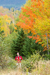 A man walks on a woods road in fall in Reddington Township, Maine. Near Crocker Mountain. High Peaks Region.
