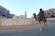 Camel and rider walk past the Mosque in Rum village, Wadi Rum, Jordan