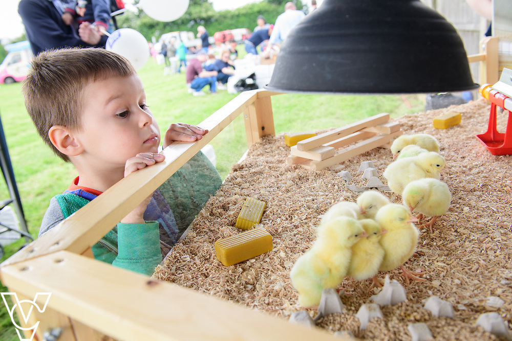 As part of Open Farm Sunday, May Park's Barr Farm in Billinghay, Lincolnshire, was open to the public.  Pictured is Lucas Hanson (four) looking at some young chicks.<br /> <br /> PIcture: Chris Vaughan Photography<br /> Date: May 21, 2017