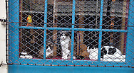 Cats in the window of the Louisiana Loom Works on Chartres Street in the French Quarter, New Orleans.  The owner, Ronda Rose, said she has a total of 12 cats in the store.
