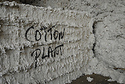 Mississippi Delta cotton(Photo/© Suzi Altman)