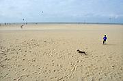 Nederland, Scheveningen, 16-9-2012Zand op het strand.Een jonge hand, teckel,tekkel, rent achter een vogel aan.Foto: Flip Franssen/Hollandse Hoogte