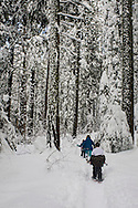 Family snowshoeing through forest in winter, Calaveras Big Trees State Park, Calaveras County, California