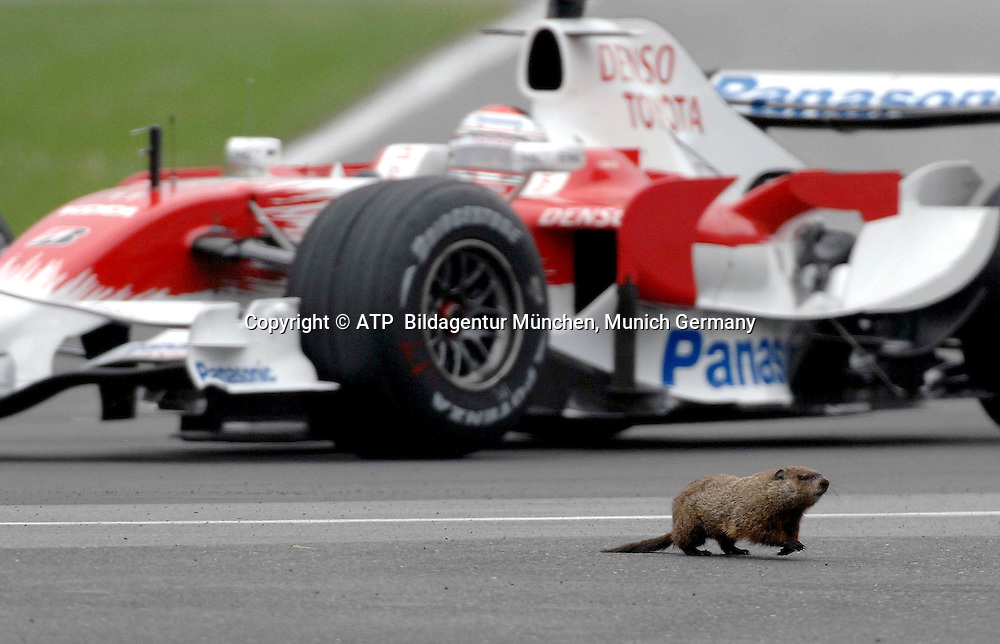 Montreal 7.06. 2008 - Formula 1 Grand Prix of Canada - Jarno TRULLI in his Toyota F1 and a beaver next to the race car - Biber, beaver on the race track - 2008 - Kanada, Formel 1 -  F1 GP du Canada au Quebec - Foto: © ATP Lukas GORYS