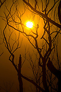 Australia | Black Saturday Bushfires