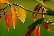 Plantes /  Plants