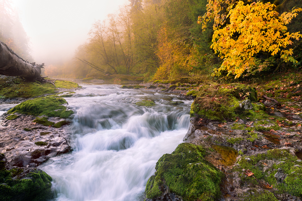 Early morning fog drifts through autumn foliage on the banks of Oregon's South Santiam River, as its waters plunge through a small rapid near Cascadia.