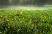 Green meadow with yellow and violet wildflowers