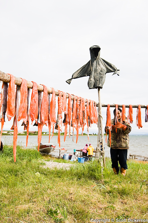 Fillet salmon are hung over poles. Iliamna, Alaska.
