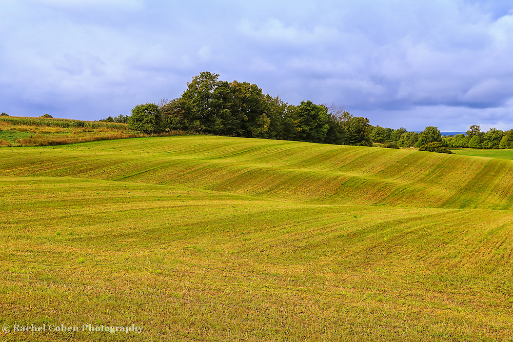 &quot;Rolling Lines&quot;<br />
