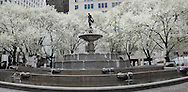 Decorative pear trees surrounding the Pulitzer Fountain in front of The Plaza Hotel in New York City.