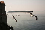 Travel in Croatia<br /> <br /> The town of Rab on Rab Island.<br /> <br /> June 2013<br /> Matt Lutton