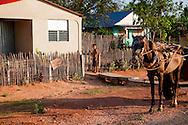 Horse and house in Niquero, Granma, Cuba.