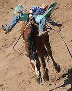 Bareback Rider Tim Paul Shirley scores an 82 riding R8 Rough Cut BR, Championship Sunday, 29 July 2007, Cheyenne Frontier Days