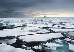 Polar bear (Ursus maritimus) in arctic ice landscape, Spitsbergen, Svalbard