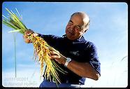 02: RICE FARM TOP PRODUCER