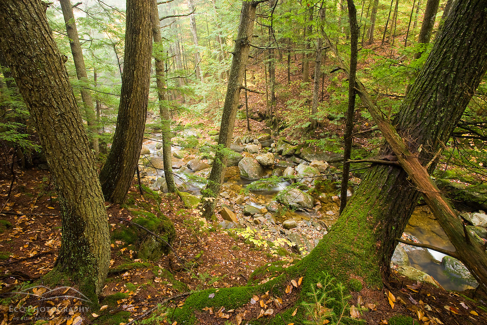 A tributary of the Baker River flows through a hemlock forest in Groton, New Hampshire.  Groton Hollow.