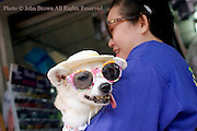 An Asian woman is carrying a dog wearing a hat and sunglasses on a city street in Chiang Rai, Thailand.
