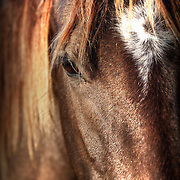 A horses gentle stare on a missouri morning.