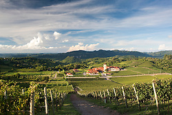 Vinhedos da Vinicola Lidio Carraro e sede da Miolo ao fundo./ Lidio Carraro winery , Vale dos Vinhedos, Bento Goncalves - Rio Grande do Sul - RS - 2010  Paulo Backes