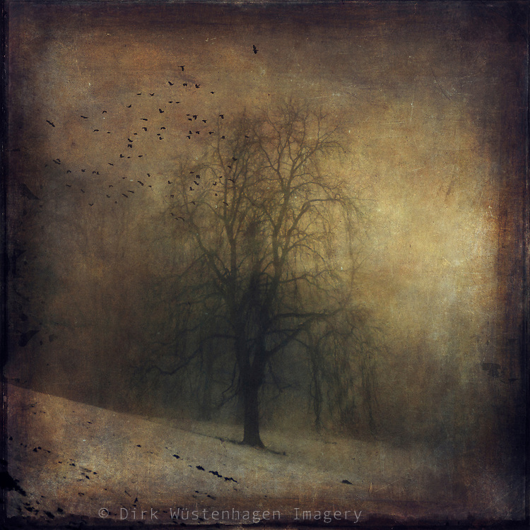 Lone tree shrouded in fog on a winter day - vintage style textured photo <br /> <br /> Prints: https://crated.com/art/112901/tristesse-by-dirkwustenhagen