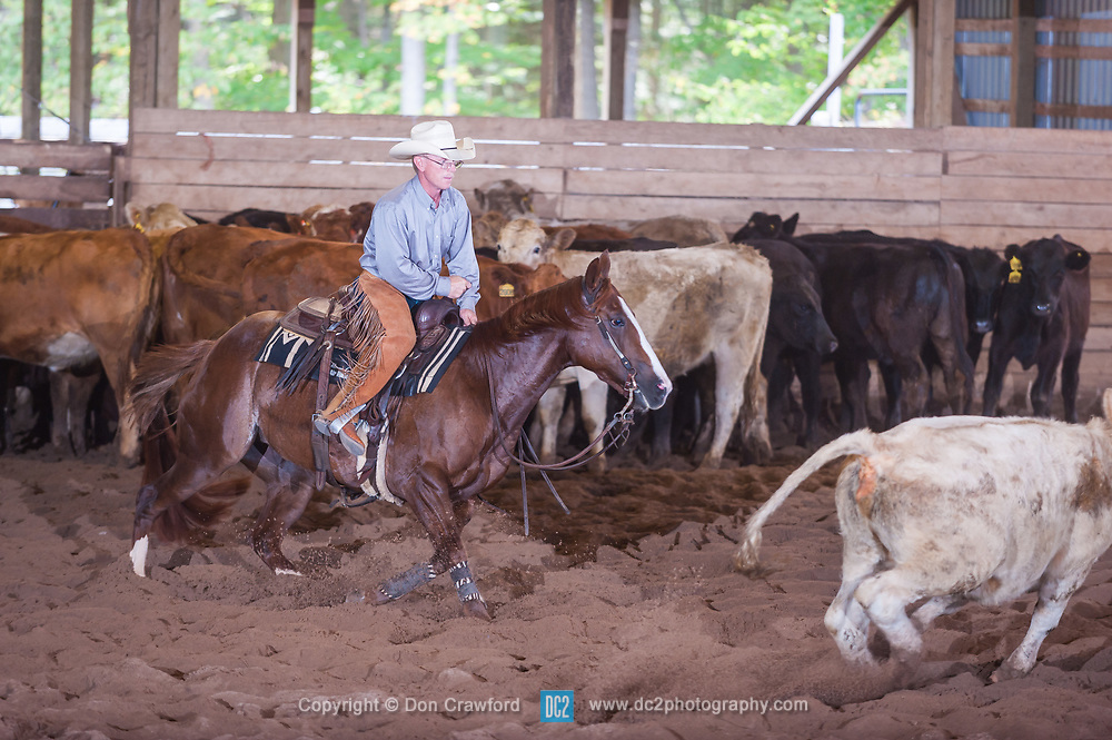 September 24, 2017 - Minshall Farm Cutting 6, held at Minshall Farms, Hillsburgh Ontario. The event was put on by the Ontario Cutting Horse Association. Riding in the $5,000 Novice Horse Class is Brian Kelly on TC Lena Cat owned by Buddy Thomas.