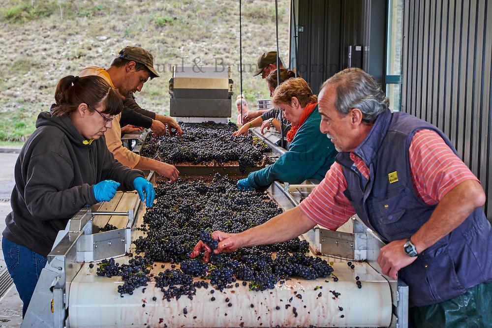 France, Centre-Val de Loire, Cher (18), le Berry,  vignoble de Sancerre, vendange // France, Cher 18, Sancerre village, vineyard, grape harvest