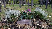 Grav på Skogskyrkogården