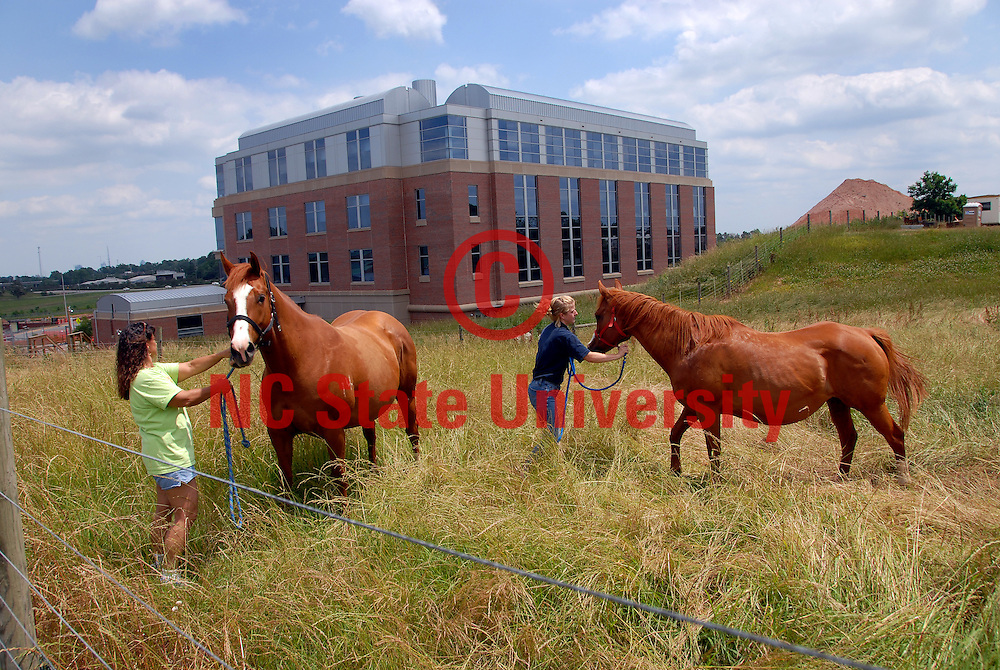 College of Veterinary Medicine equine unit staff and horses in front of the CVM research building. PHOTO BY ROGER WINSTEAD
