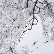 Jake Cohn skis a line in the magical trees in the Rusutsu, Japan backcountry