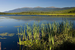 Big Cherry Pond and the Presidential Range in Jefferson, New Hampshire.  Pondicherry National Wildlife Refuge.  White Mountains.  Summer.  Cattails.