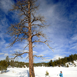 Winter cross country skiing in the Zuni Mountains at McGaffey, New Mexico.