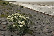 Waddenzee met strand aan Westerzeedijk Harlingen