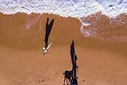 Aerial photo of a woman with a surfboard and people walking their dog and long late afternoon shadows, Shelly Beach, Sunshine Coast, Queensland, Australia
