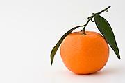 Clementine, London, England, United Kingdom