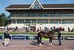 Anastasja Vistalova, (CZE), Jambo - Horse Inspection Para Dressage - Alltech FEI World Equestrian Games™ 2014 - Normandy, France.<br /> © Hippo Foto Team - Jon Stroud<br /> 25/06/14