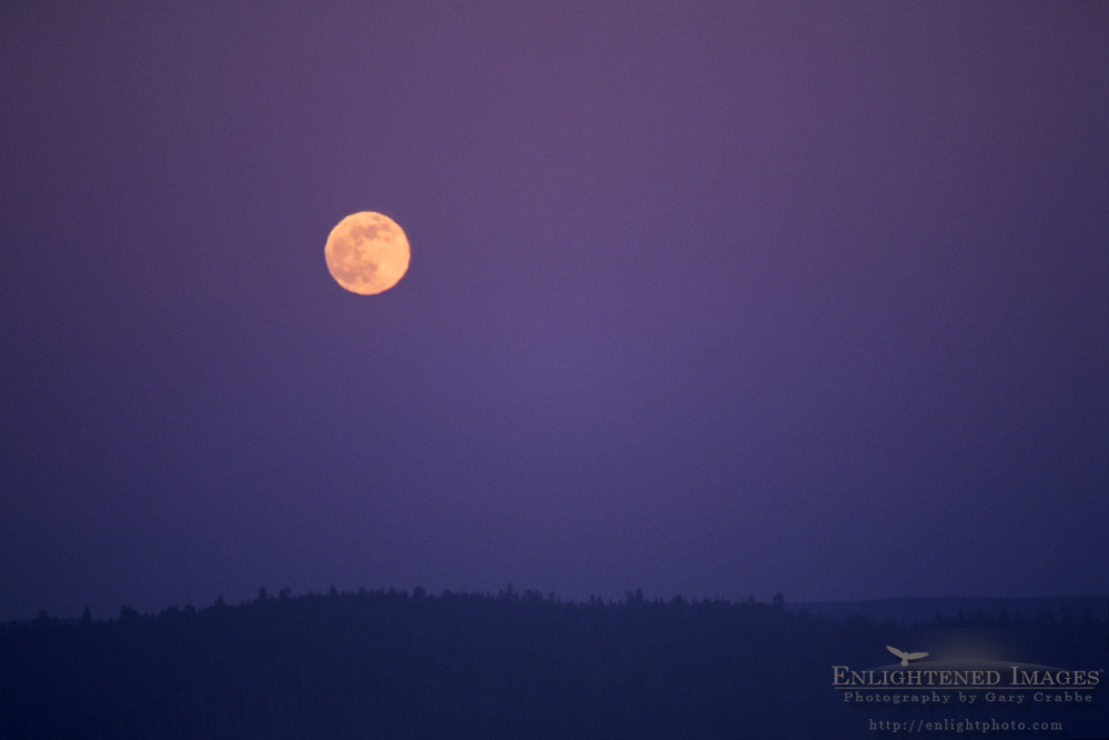 Full moon rising in evening sky, Del Norte County, California